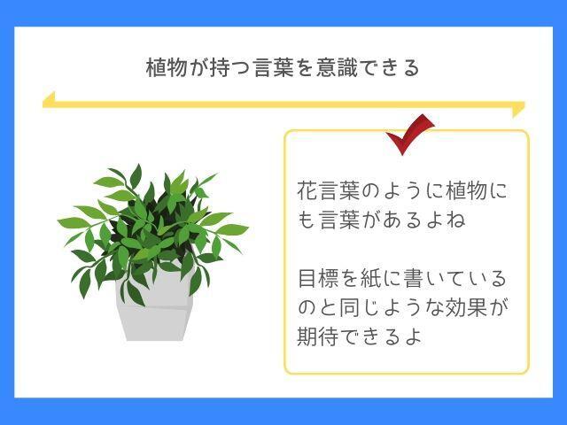 植物にも植物言葉があるよね