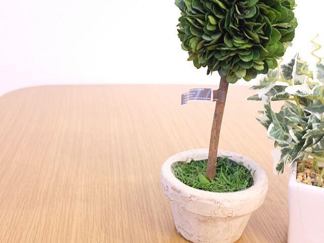 私が動画で飾っている植物